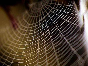 Örümcek Ağı Dünyanın En Sağlam Maddesimidir?