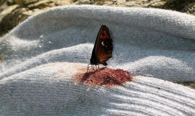 Kelebekler Hakkında Gerçekler…