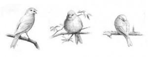 daldaki kuş