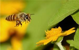 uçan arı