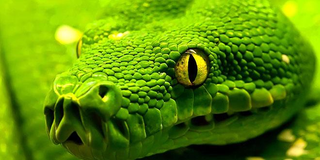 Yılanın Zehri Neden Kendisine Zarar Vermez?