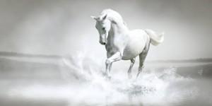 White Horse 300x150 Beyaz Rengin Anlamı