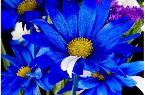 Mavi Rengin Anlamı