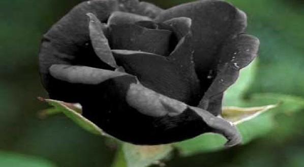 Siyah Rengin Anlamı