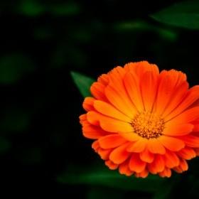turuncu turuncu