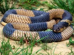 yılan 1