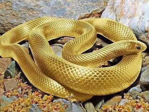 Yılanların Ayakları Neden Yoktur?