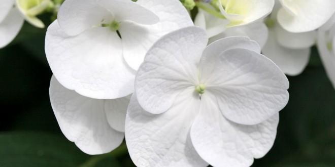 Beyaz Rengin Anlamı